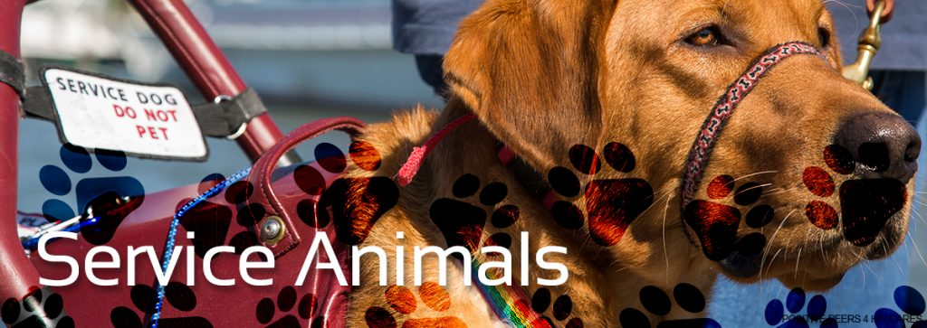 Animal-Therapy-Positive-Peers